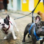 Programa especial para perros con sensibilidad extrema