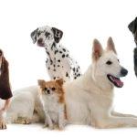 La importancia de un grupo social canino